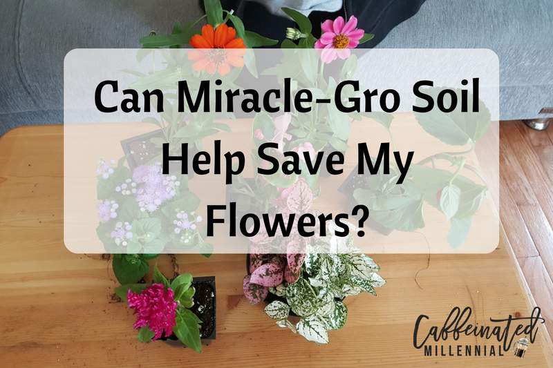 Can Miracle-Gro Soil Help Save My Flowers?