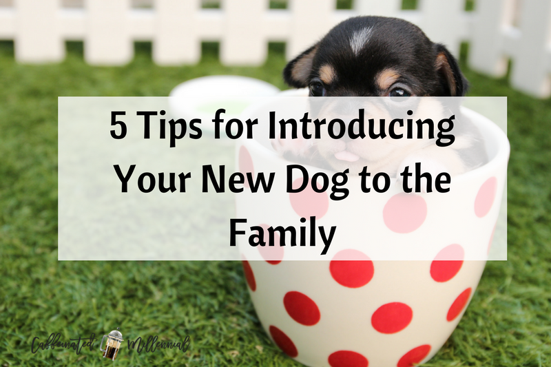 5 Tips for Introducing Your New Dog to the Family