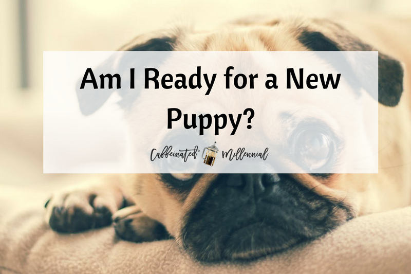 Am I Ready for a New Puppy?